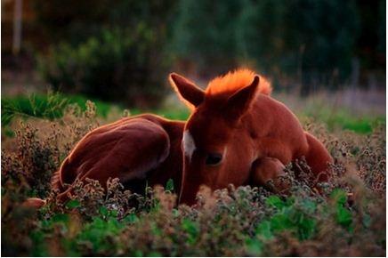 .Quarter Hors, Baby Horses, Finding Happy, Dreams Big, Beautiful, New Life, Wild At Heart, Sleep Baby, Animal
