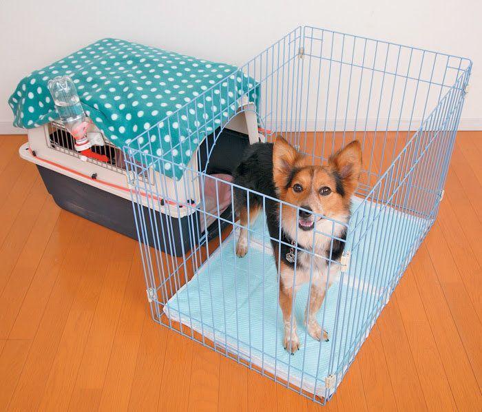 獣医師が教える 室内犬のケージ飼いのメリットや留守番のコツなど いぬのきもちweb Magazine 犬ケージ 犬のケージアイデア 犬 クレート