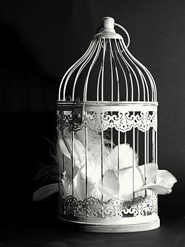 Διακόσμηση, Κλουβί, Φτερά
