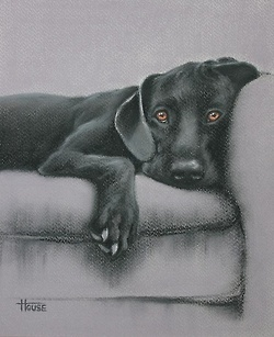 stunning black labrador retriever / lab #Puppy #Dog #Dogs #Puppies Portrait Painting Pastel