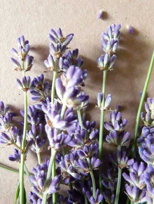 In de afgelopen jaren heb ik steeds stekjes genomen van mijn lavendelplant en die een plekje gegeven in mijn voortuin. Inmiddels heb ik nu e...