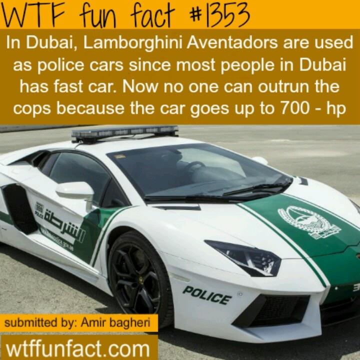 Fact 1353