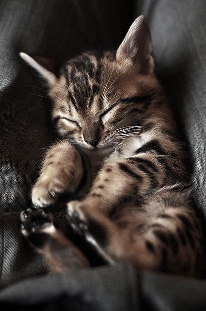 Plus de siestes...