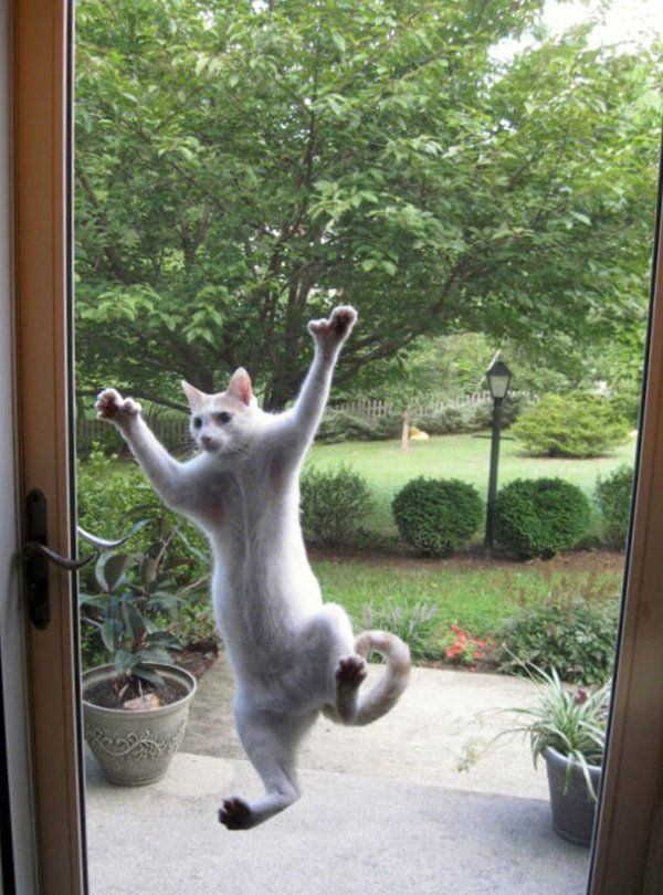 Please let me in – 30 Funny Animal Pictures