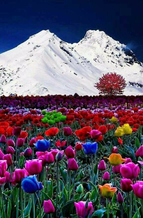 Fantastic Beauty Beautiful Nature Beautiful Landscapes Nature Photography