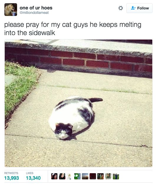 39 Tweets About Cats That Make Us Laugh Every Single Time