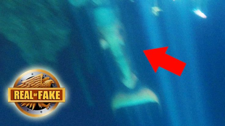 MERMAID CAUGHT ON TAPE MEXICO - real or fake?