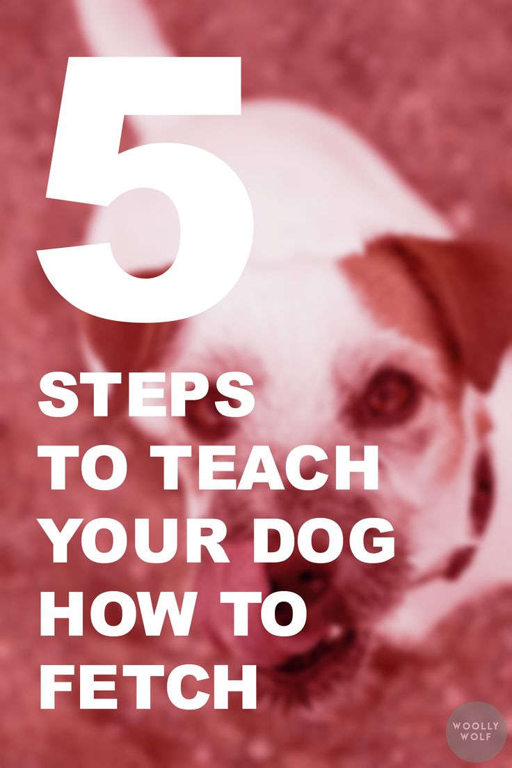 5 Steps to Teach your dog how to fetch. Playing with dog, dog training ideas, puppy training tips.