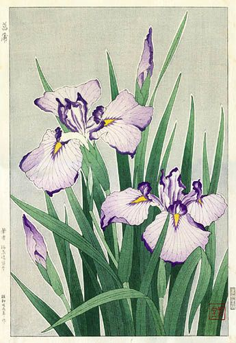Iris, White  by Kawarazaki Shodo, 1954  (published by Unsodo)