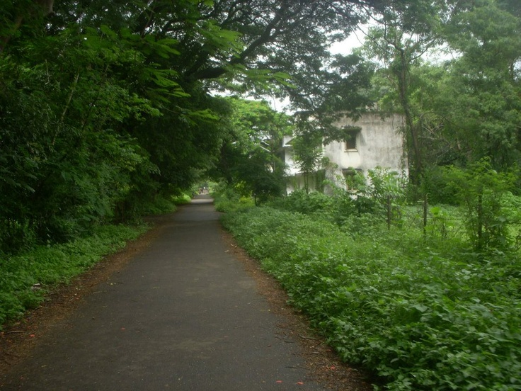 Development of colony without disturbing the greenery — at HA colony.