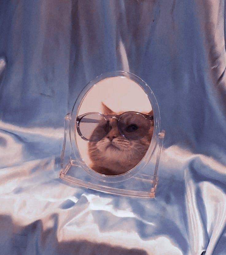 Aesthetic Cat Gambar Hewan Lucu Piaraan Binatang