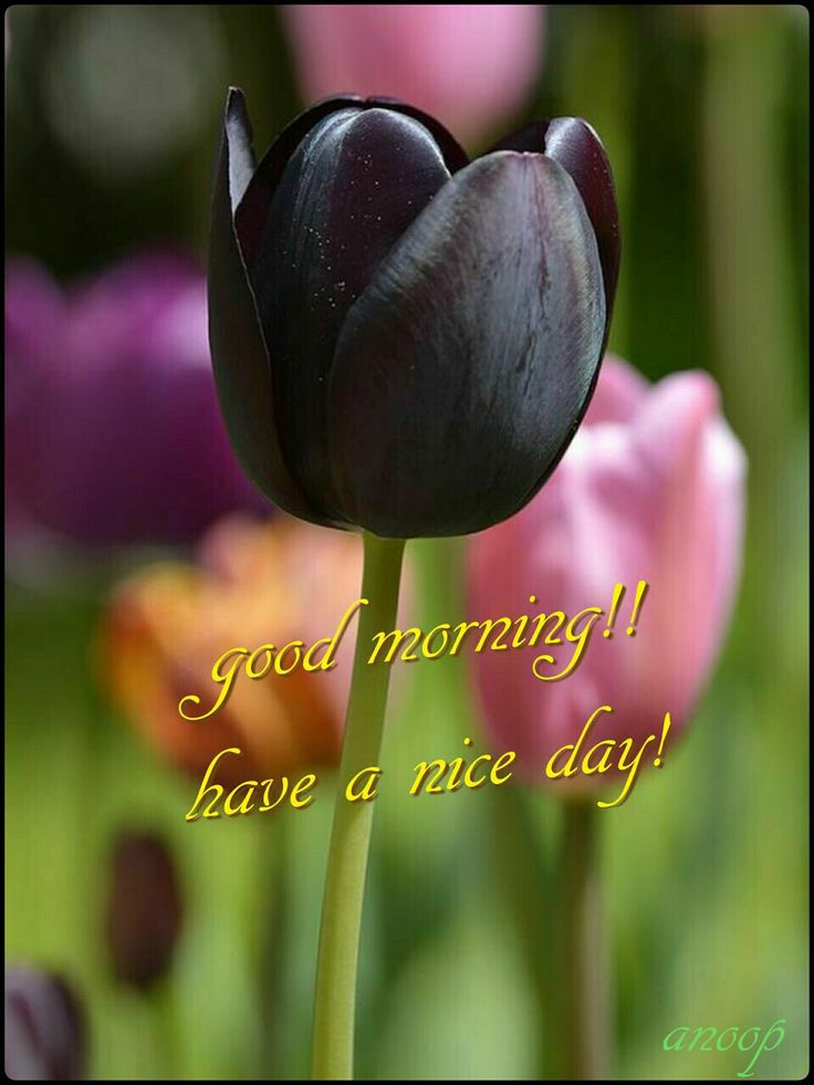 Good Morning Quotes With Fruits: 1253 Best Images About Good Morning Quotes On Pinterest