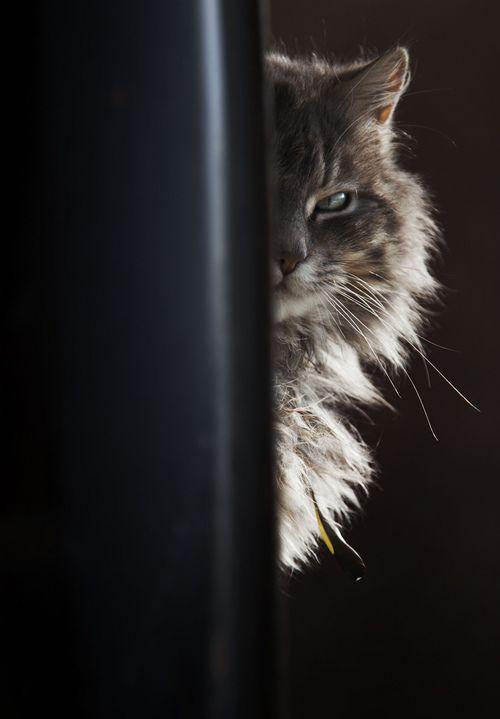 essence of cat 2