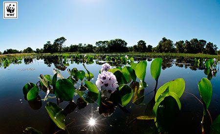 Águas de Pontal: Dia do Pantanal: Ação conjunta busca recuperar nas...