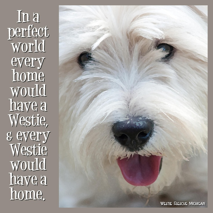 Truth!! Except, I'd change this to every home would have two Westies. They're definitely better in pairs!