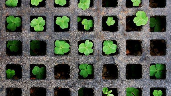 Отдых в Ирландии: путешествие по Ирландии, путеводитель | Redigo.ru
