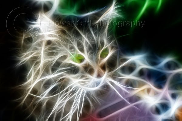 Sasquatch, my Maine Coon, outside on the patio (and fractalius) ... [RIP Sasquatch 2013]
