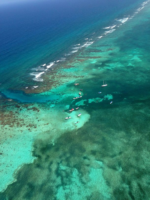 "Belize Barrier Reef | ... barrier reef"" ""Hol Chan"" ""Shark ray alley"" ""barrier reef Belize"