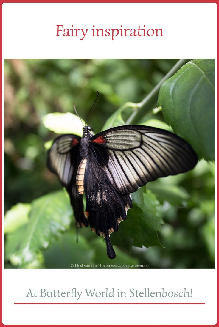 There are many places around the Western Cape that I love visiting when I need some fairy inspiration. Butterfly World just outside Stellenbosch must be one of the best!  #artinspiration #creativeprocess #calledtobecreative #inspirationfromnature