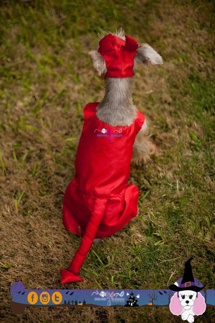 Disfraz de diablita, color rojo, ♀. Con gorrito. Mascota: Brisa (Schnauzer) Talla: 3  Fotografia: Tatiana Rodriguez Diseño: América García