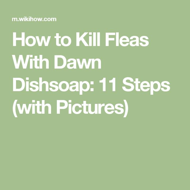 How to Kill Fleas With Dawn Dishsoap: 11 Steps (with Pictures)