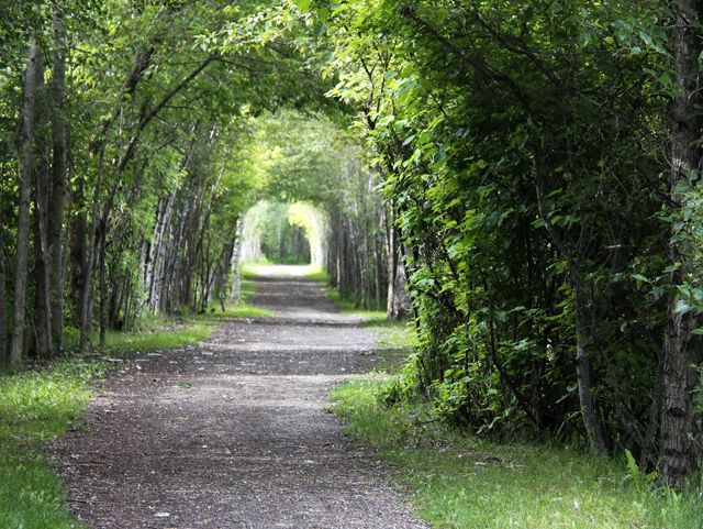 A tunnel of trees - in a park near Shuswap Lake, Salmon Arm