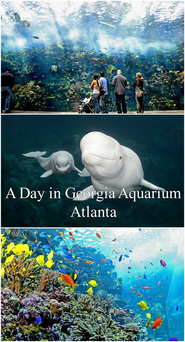 Georgia Aquarium Atlanta - Feel like a SCUBA diver in an endless blue sea.