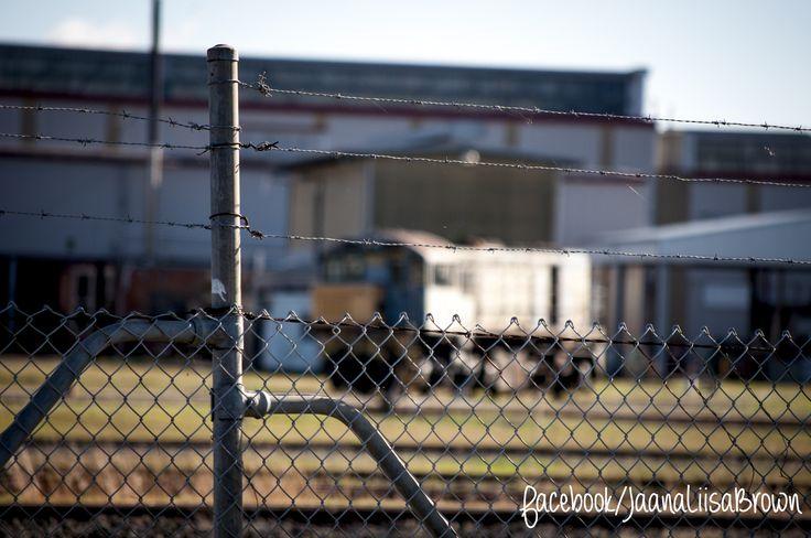 ISO200 1/640 sec. f/6.3 200 mm Photo taken at the Train Yard, Redbank visit www.facebook.com/jaanaliisabrown for more www.jaanaliisabrown.com #shooteveryday #goodnacreek #floods #studentphotographer #NikonD5000 #Nikon #D5000 #shootmanual #jaanaliisabrown #visualarts #photography #affordablephotographer #Ipswichphotographer #brisbanephotographer #redbank #goodna #goodnaphotographer #talentinthehood