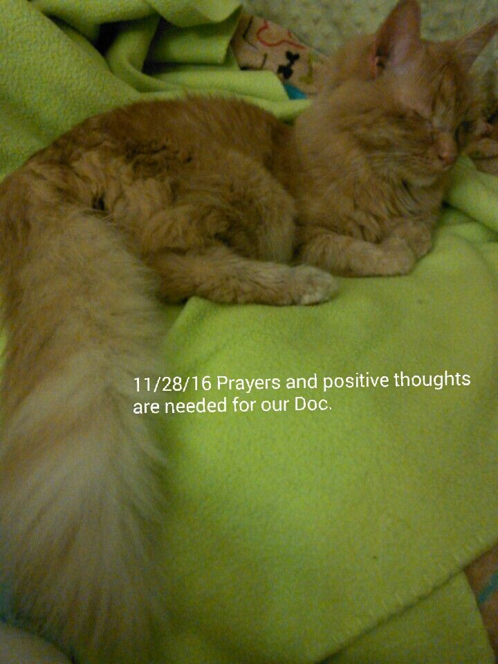 11/28/16      CAN DOC GET A POSITIVE MESSAGE OR PRAYER? Please pray or send positive thoughts  to our Doc..thank you so very much. Bernadette and Jamie and Doc's friends.