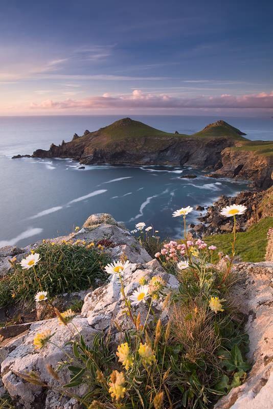 The Rumps, #Polzeath. A fabulous #walk with beautiful coast loving flowers to enjoy along the way.