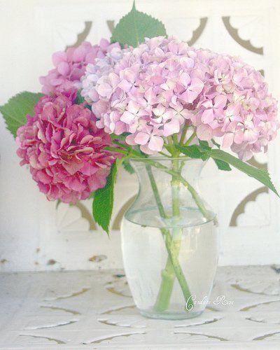 Dieser Monat ist genau die richtige Zeit um Hortensien zu schneiden und trocknen für wunderschöne dekorative Trockensträuße. Wenn die Hortensien auf die richtige Art getrocknet werden, halten sie jahrelang. Auch die schöne Farbe bleibt erhalten. Wir erklären Dir, wie man das am besten macht. Ein schön getrockneter Hortensienstrauß ist ein unglaublicher Blickfang in jedem Raum …