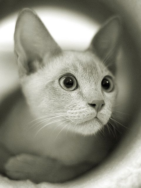 Kitty cat gato blanco