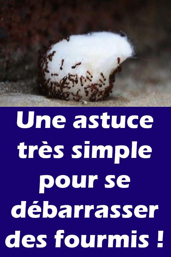 Une astuce très easy pour se débarrasser des fourmis !
