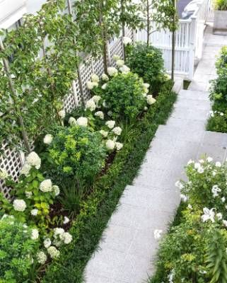 The steps around the side of the house are framed by ornamental pleached pears that remind Deighton of time spent in ...