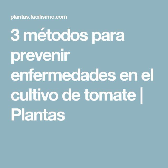 3 métodos para prevenir enfermedades en el cultivo de tomate   Plantas