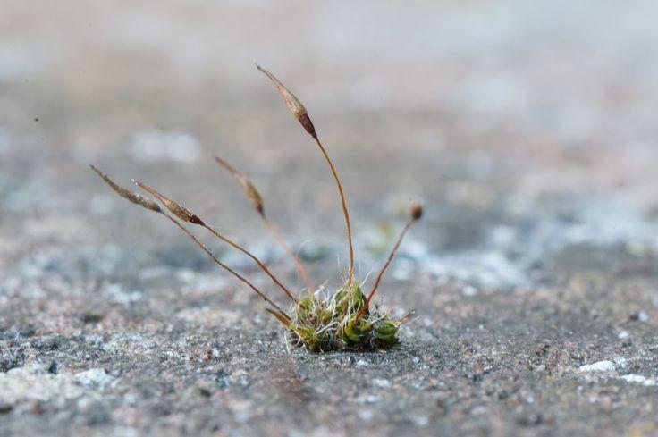 Tiny moss on stone wall