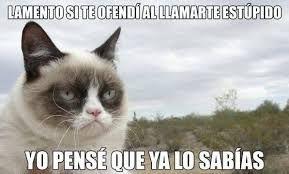 Resultado de imagen para grumpy cat meme español