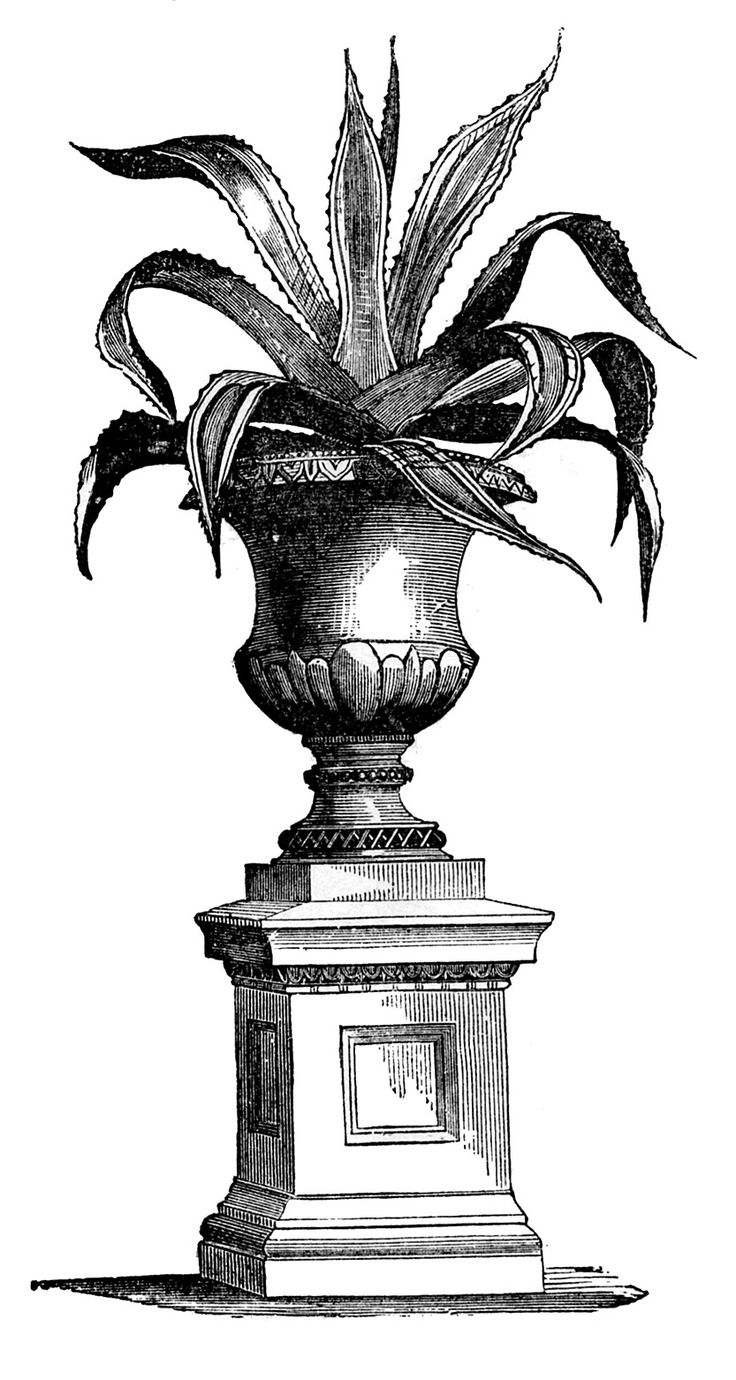 Victorian Garden Graphics   Potted Plants In Urns