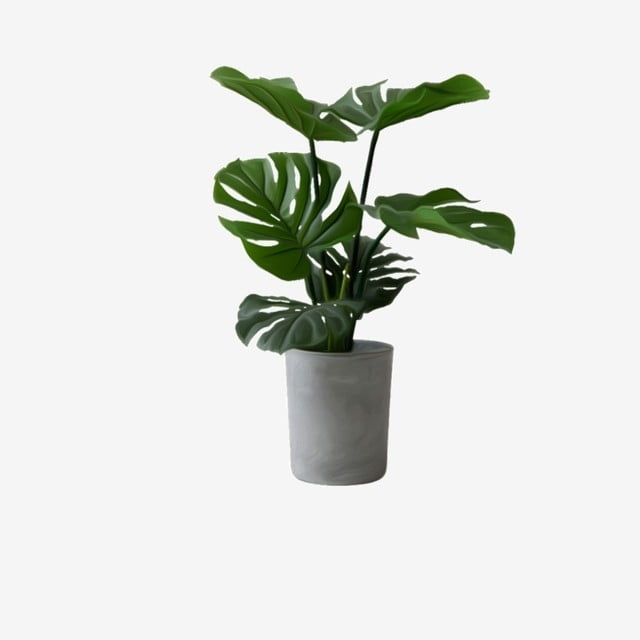 Potted Plants Plant Clipart Green Plant Plant Png Transparent Clipart Image And Psd File For Free Download Plants Green Plants Potted Plants