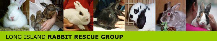 Long Island Rabbit Rescue Group Adoptable Rabbits