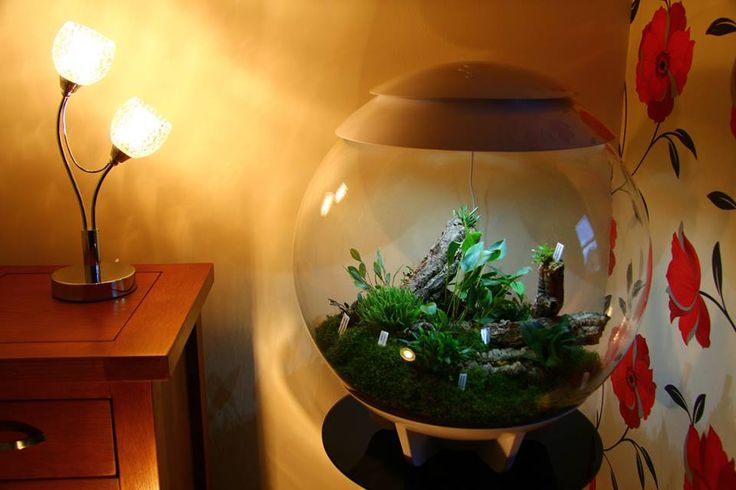 41 Best Exotic Fish Tanks Images On Pinterest Fish