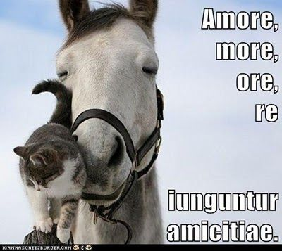 Amore, more, ore, re iunguntur amicitiae.    Friendships are connected  by love (amore), by habit (more),  by speech (ore) and by action (re).