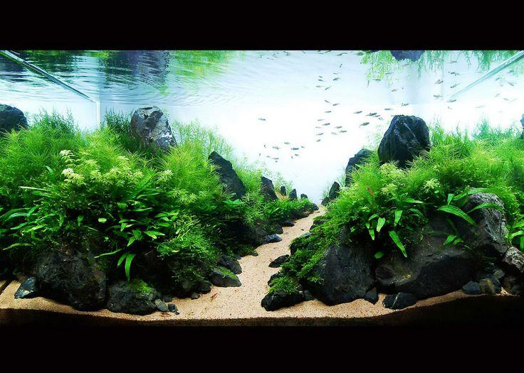 7 best underwater world for boris images on pinterest aquariums rh pinterest com