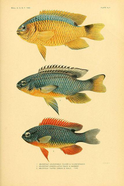 n316_w1150 | Flickr - Photo Sharing! #nature #fish #scientific #illustration