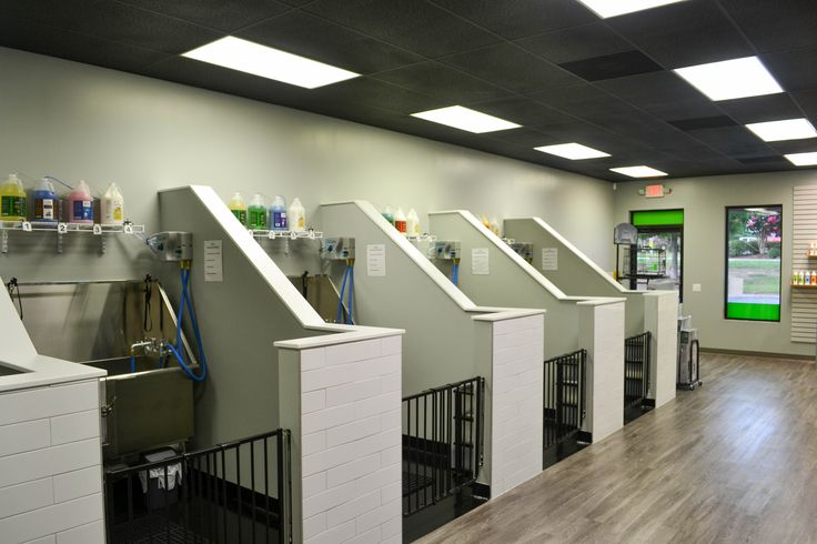 Self service dog wash houston tx the best dog 2018 pet grooming clified for dog and groomers career seekers solutioingenieria Image collections