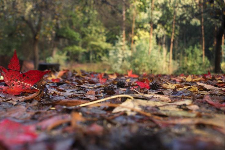 Desde demirar.cl: En honor a las 100 hectáreas quemadas en Jardín Botánico – ciudad de Viña del Mar, Quinta Región, Chile. http://www.demirar.cl/2013/01/en-honor-a-las-100-hectareas-quemadas-en-jardin-botanico-ciudad-de-vina-del-mar/