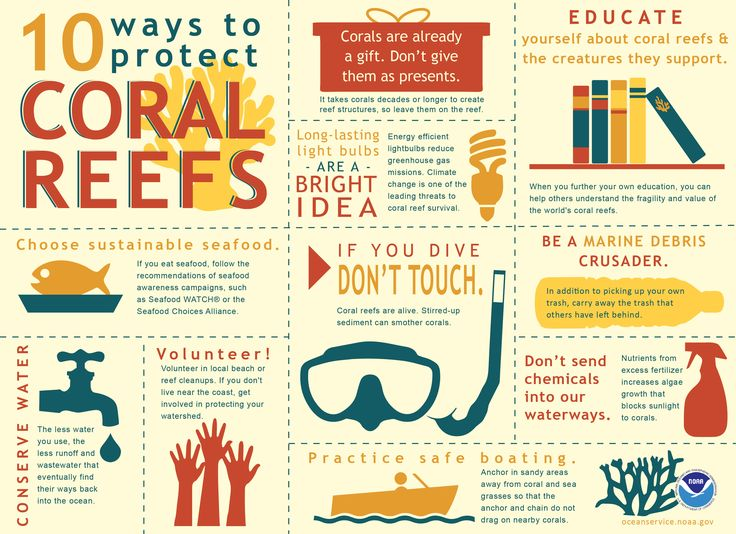 10 Ways To Protect Coral Reefs Miscellaneum Coral