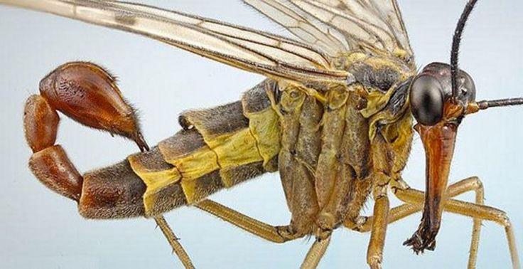 20 insectes qui possèdent des caractéristiques physiques fascinantes | Daily Geek Show