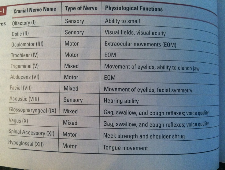 Cranial nerves functions