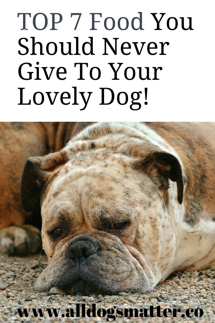 17 best images about cat dog lovers community on pinterest pet insurance bully sticks and. Black Bedroom Furniture Sets. Home Design Ideas